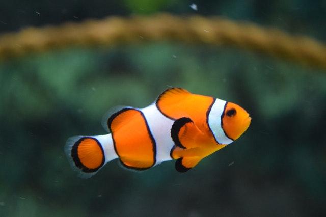 Can Fishkeeping Help