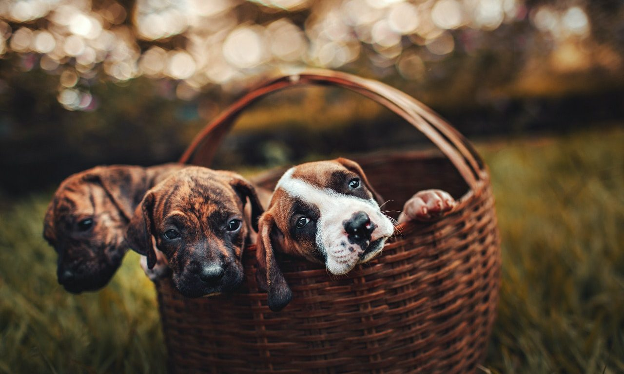 Benefits From Having Pets In Your Life